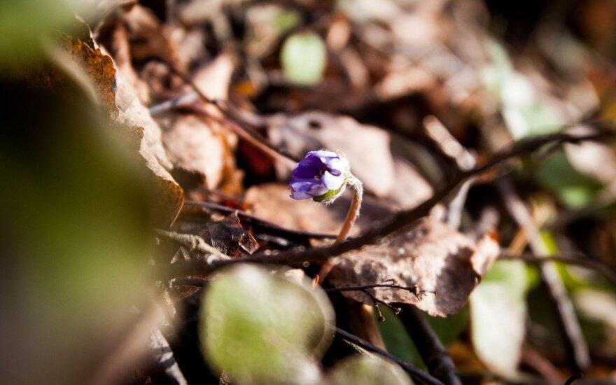 Orai: galų gale mėgausimės pavasariu