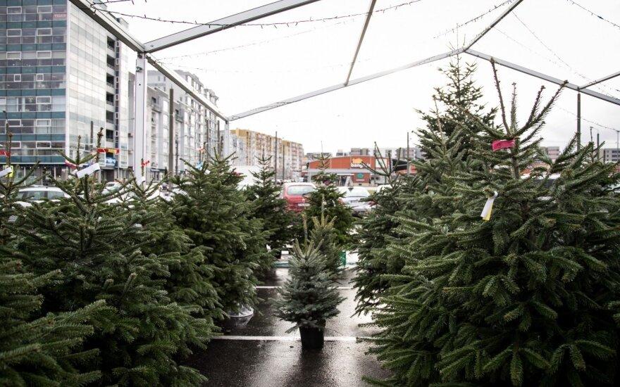 """Kalėdų medis"" eglutės"
