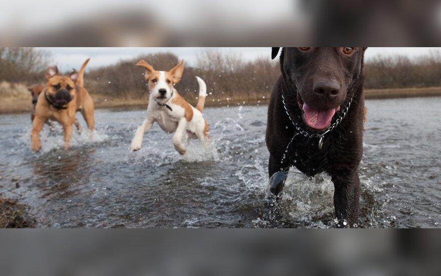 Šunis Lietuvoje puola erkės