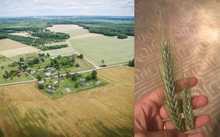Ūkininko žmona nuogąstauja: sausros pasekmės bus didesnės nei pernai