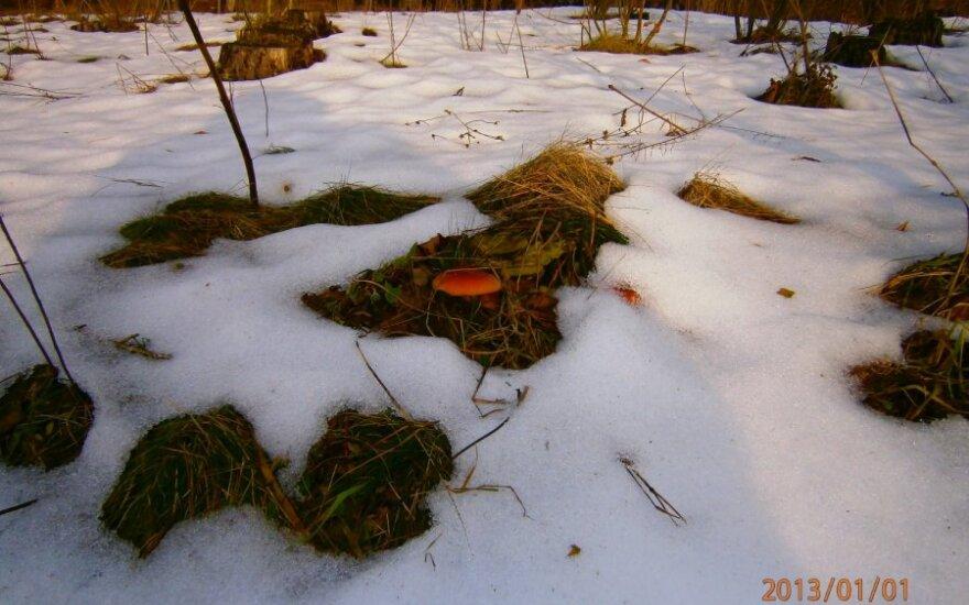 Metų pradžioje - netikėtas radinys miške