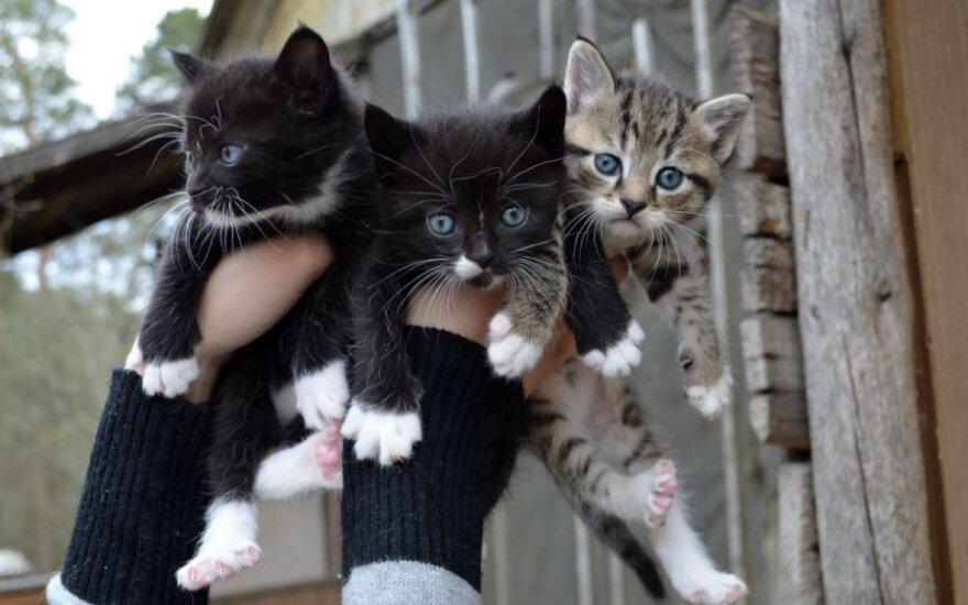Maži kačiukai - pipiriukai ieško namų!