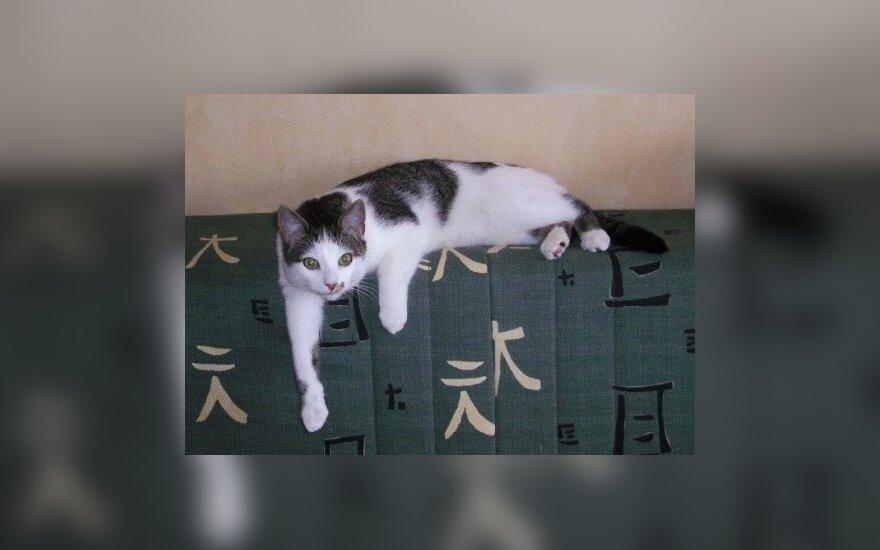 Dingo mylimas katinas