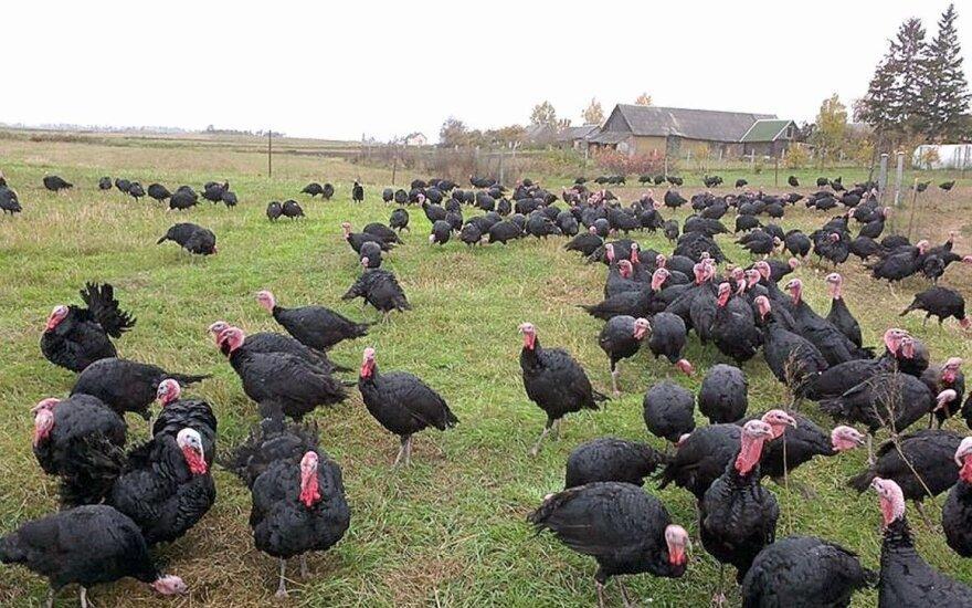 Paukščių gripas plinta toliau: nauji protrūkiai Čekijoje ir Bulgarijoje