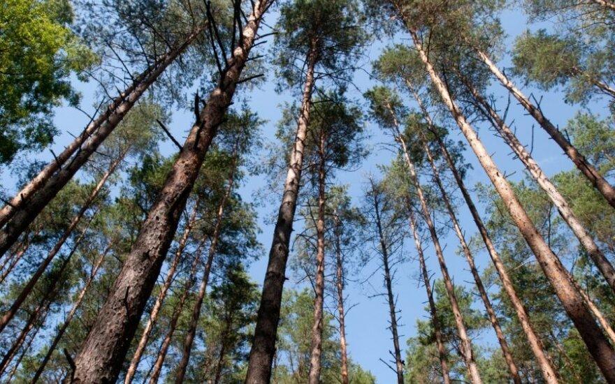 Miškas - Lietuvos puošmena, bet ką daryti, kad ji
