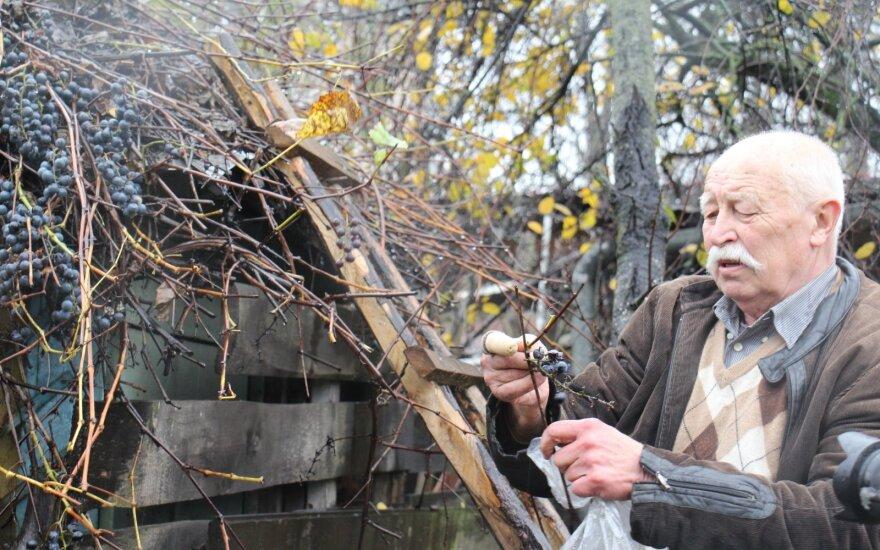 Chromu užteršta Klaipėda: žmonės bijo valgyti daržoves, tarnybos ėmė jas rinktis tyrimams