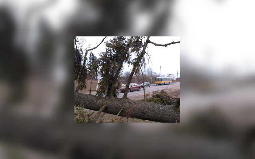 """Lietuvoje praūžęs uraganas """"Ervinas"""" vartė medžius"""
