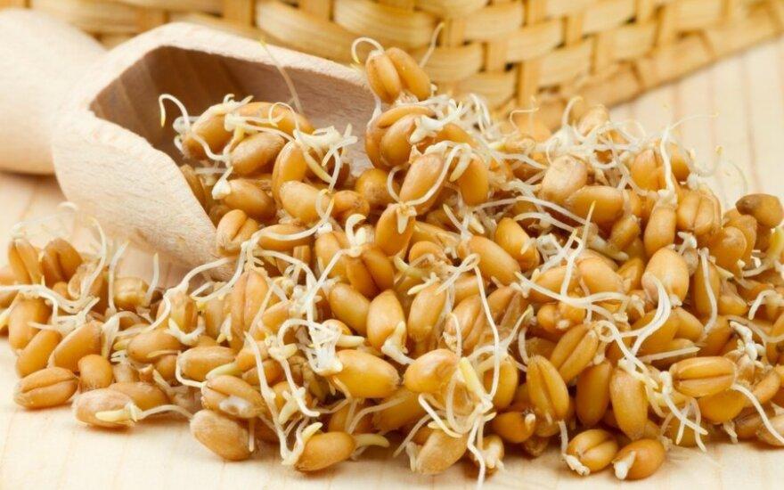 Daigintų kviečių, agurkų ir avokadų sriuba