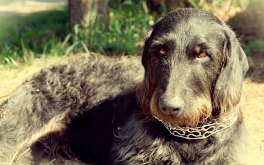 Antaviliuose rastas šunelis ieško gerų namų