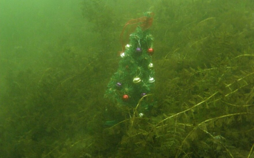 Ežero dugne - su šampanu ir Kalėdų eglute