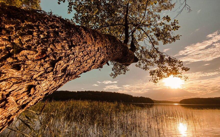 Niekinami ūkiniai miškai – kas mūsų laukia (II dalis)