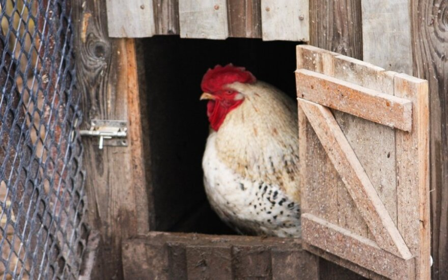 Poultry consumption in Lithuania doubled over decade
