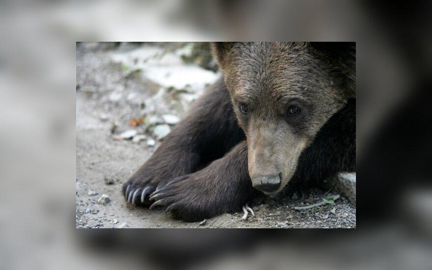 Sekmadienį - Užgavėnės Lietuvos zoologijos sode