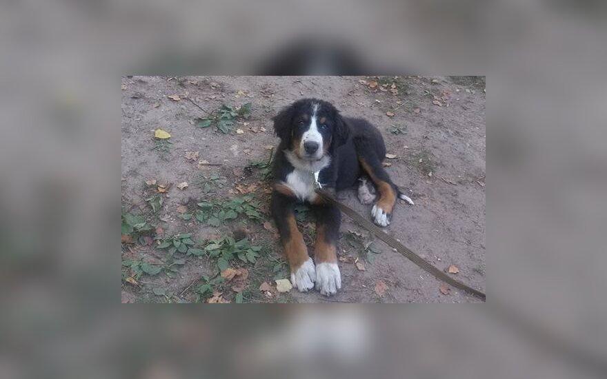 Obelių seniūnijoje dingo mylimas šunelis!
