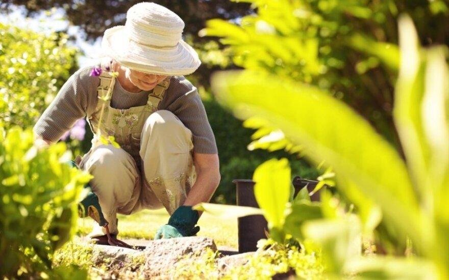 Kokie svarbiausi sodo ir daržo darbai birželį?