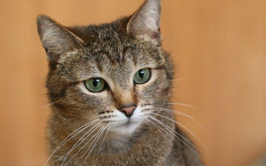 Pasiklydusi katytė laukia šeimininkų