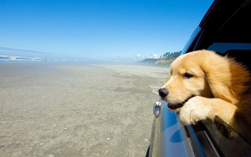 Kai kurie šunys mėgaujasi kelionėmis automobiliu, tačiau Woodley nutarė pavairuoti