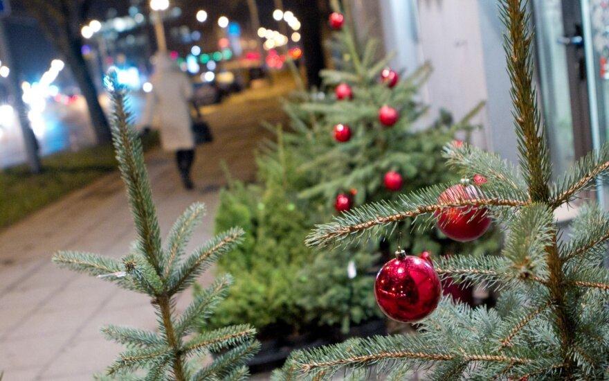Prekyba Kalėdų eglutėmis: kokių kainų laukti?