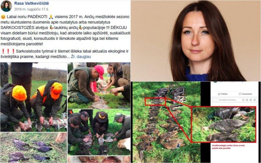 Ornitologų draugijai užkliuvo viceministrės Vaitkevičiūtės medžioklė: šaudė nykstančius paukščius?