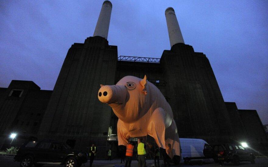 """Per """"Pink Floyd"""" koncertus virš scenos skraidžiusi kiaulė"""