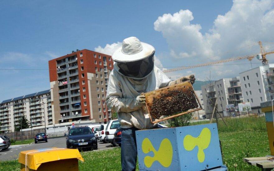 Miesto bitininkystė