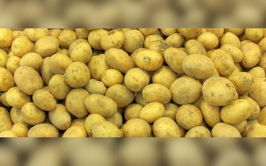Maisto krizė verčia reanimuoti smulkiuosius ūkininkus