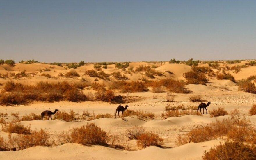 Trumpas pasiūlė Ispanijai pastatyti sieną per Sacharą