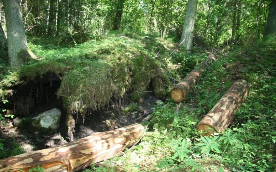 Kertinės miško buveinės – kur žmogaus kojai vietos nėra