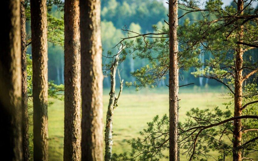 Čepkelių valstybinis gamtinis rezervatas