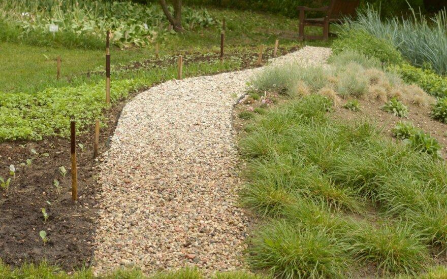 VDU Botanikos sode – nauja gruntą valančių augalų ekspozicija