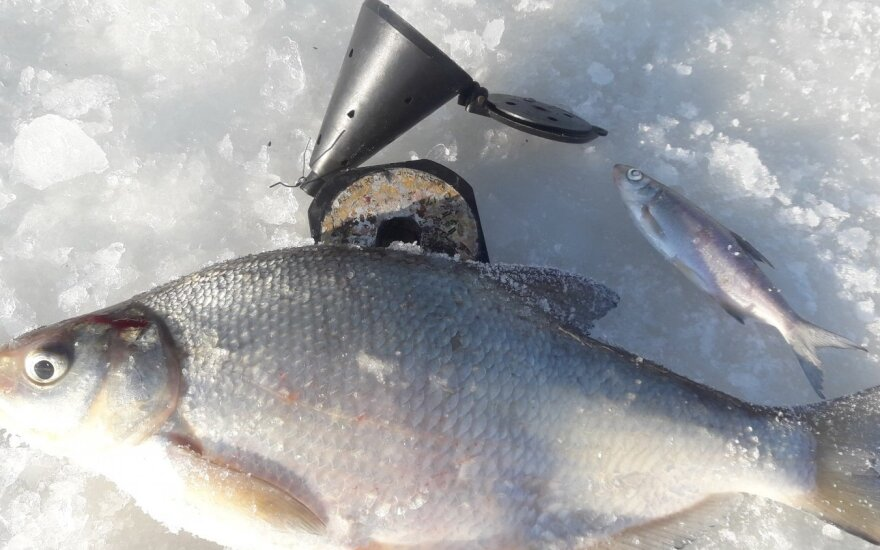 Akimirka iš poledinės žūklės ant Kauno marių ledo