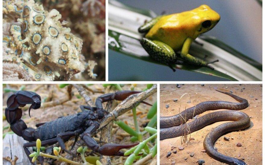 Nuodingiausi pasaulio gyvūnai / Agentūros AFP, Shutterstoc, Wikimedia Commons (CC-SA) nuotr.