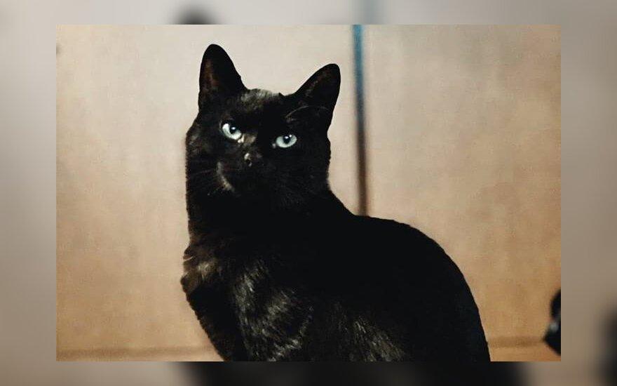Svajojantiems apie ypatingą juodą katiną: drovusis Mauglis ieško namų