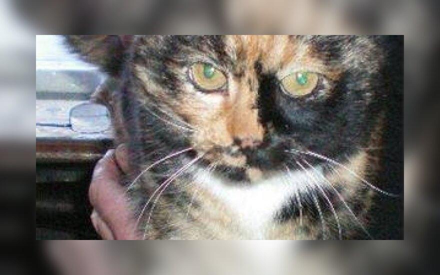 Katės Marmės istorija: kai savos durys užsidaro...