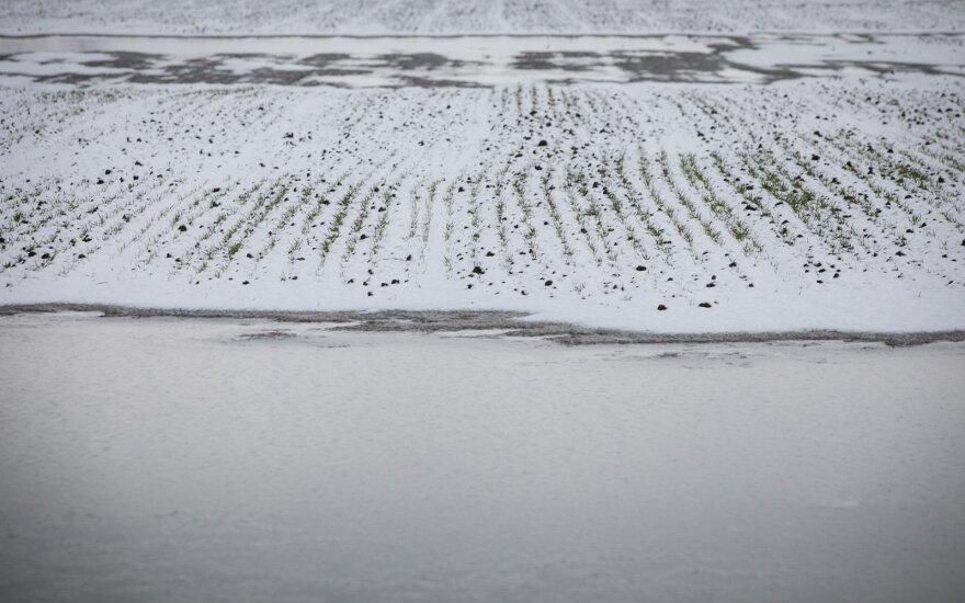 Po pernykščių liūčių – naujas smūgis ūkiams