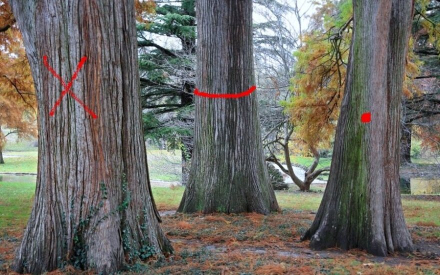 Asociatyvi nuotr. / Kirtimui pažymėti medžiai