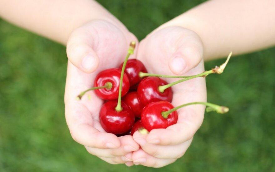 Septyni dalykai, kuriuos turite žinoti apie vyšnias