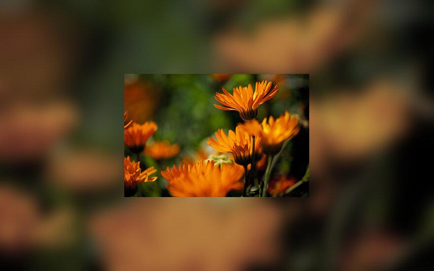 Sodas, gėlės