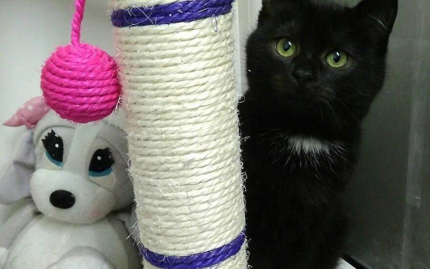 Meili katytė dairosi namučių