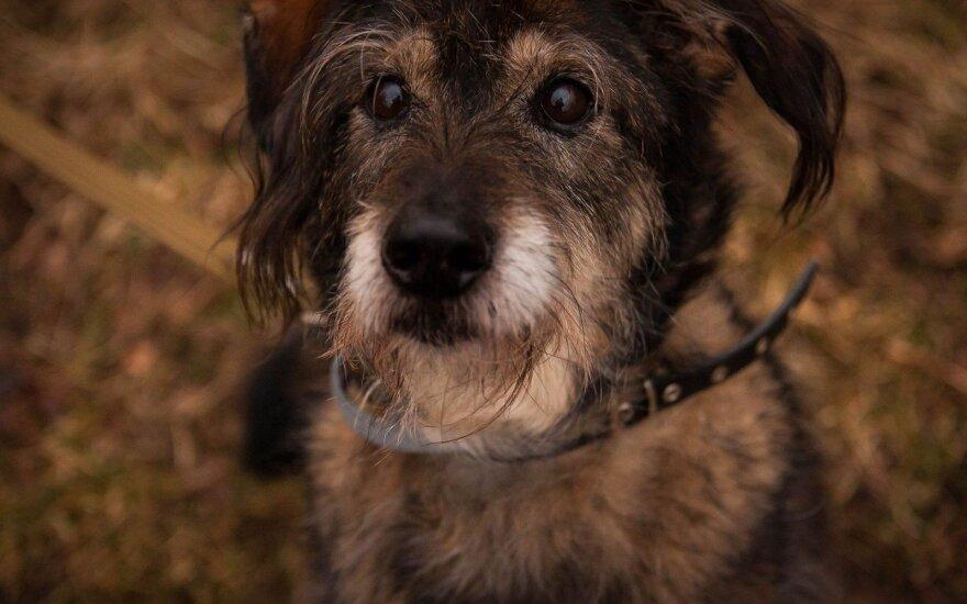 Vieninteliame Vilniuje šunims suteikiama galimybė būti visuomenės dalimi