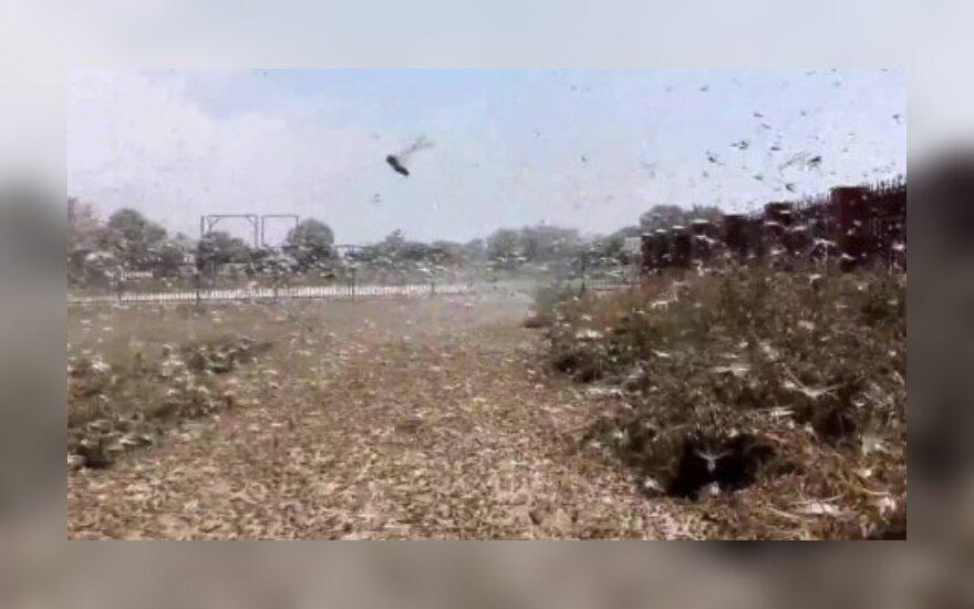 Somalyje dėl skėrių antplūdžio paskelbta nepaprastoji padėtis