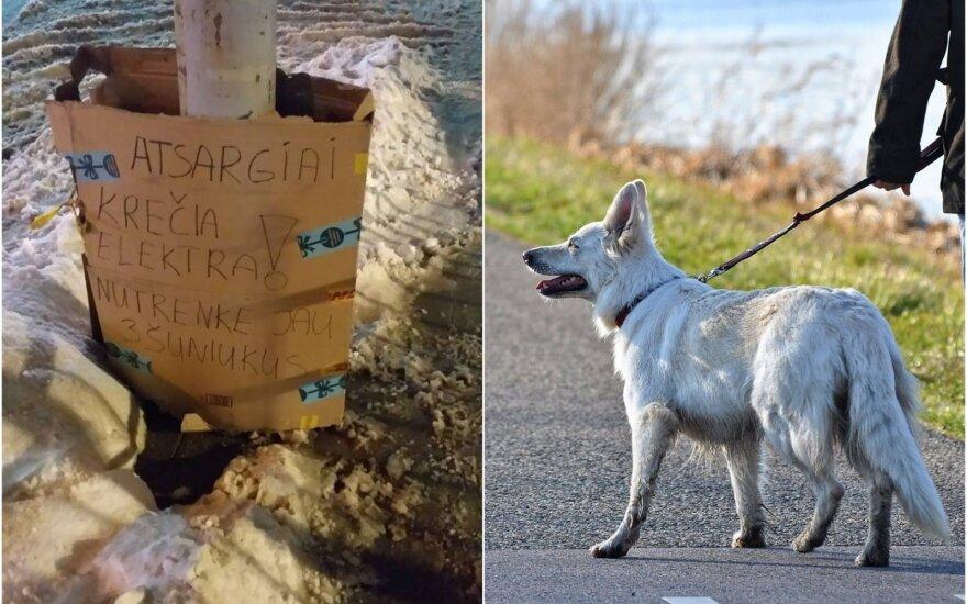 Šunis Vilniuje krečia elektra