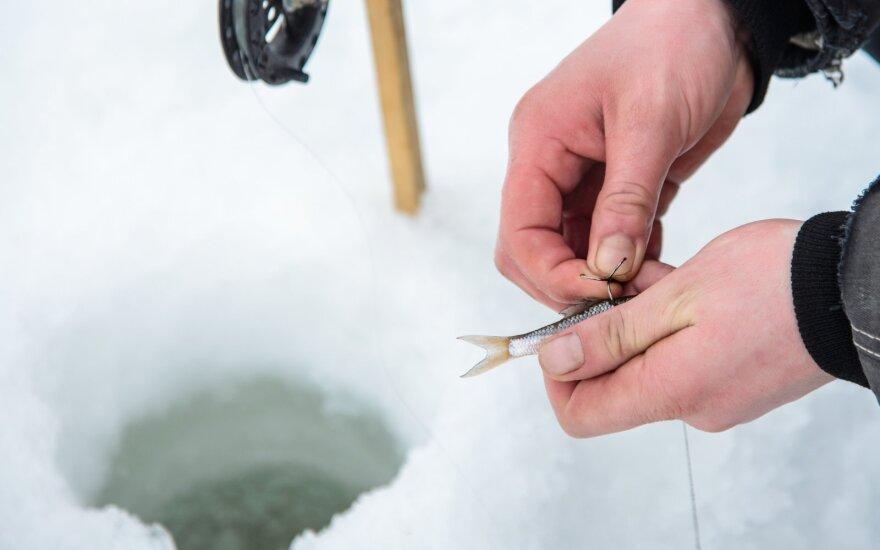 Žvejyba gyva žuvele