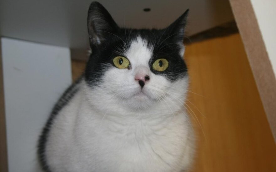 Minkštutė Manija, su dviem taškiukais ant nosies