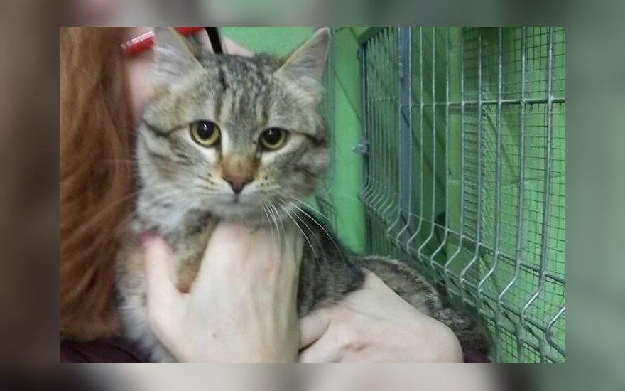 Viečiūnų gyvūnų priežiūros centre naujų šeimininkų laukia katinėliai