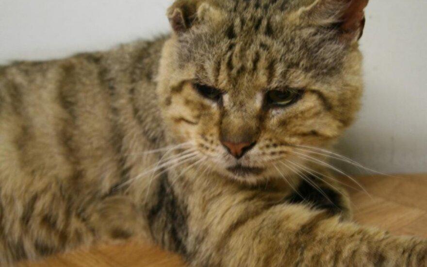 Prašo padėti katinams: jie pavargę, bet tiki žmogaus gerumu