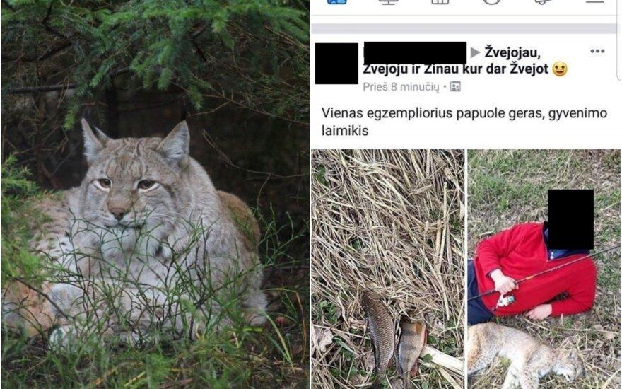 Lūšių medžioklė Lietuvoje daudžiama