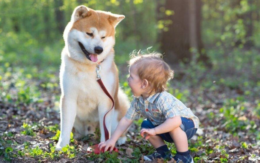 Didelis šuo ir mažas kūdikis: kaip jiems susidraugauti?