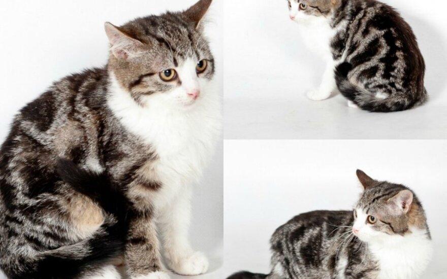 Išskirtinė katytė ieško namų
