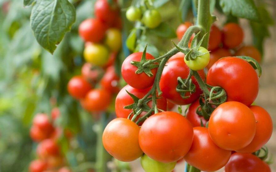 Pomidorai mažina insulto riziką